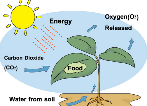 carbon dioxide in organisms and ecosystems essay Ecosystem essay ecosystem and over an ecosystem is a biological environment consisting of all the organisms living in a particular area, as well as all the nonliving, physical atmosphere gases(nitrogen, oxygen, carbon dioxide are the most important), water, wind, soil these.
